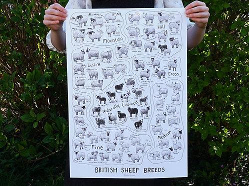 British Sheep Breeds_A2 Poster White(A2海報_白)