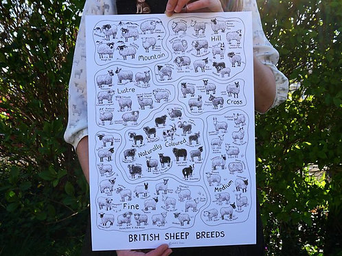 British Sheep Breeds_A3 Poster White(A3海報_白)