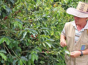 Visite d'un producteur de café à Arménia