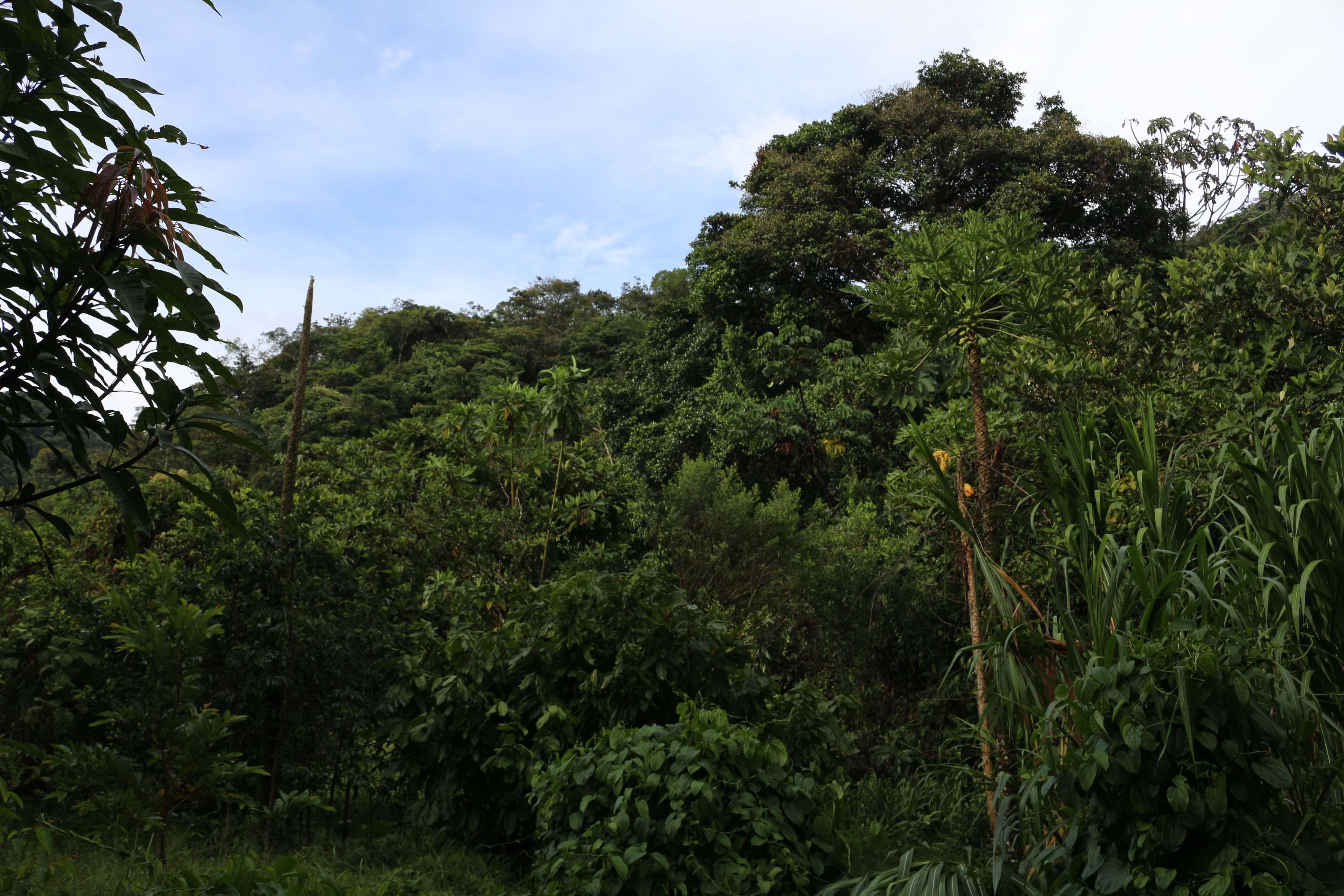 Forêt Tropicale de San Rafael