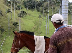 Visite à San Felix et ses palmiers de cire en Colombie
