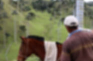 Palmiers de cire de Quindio proche de Salamina