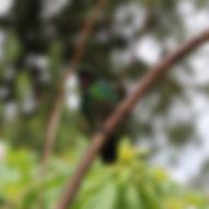 Séjour à Jardin en Colombie