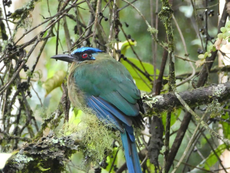 Barranquero en Colombie