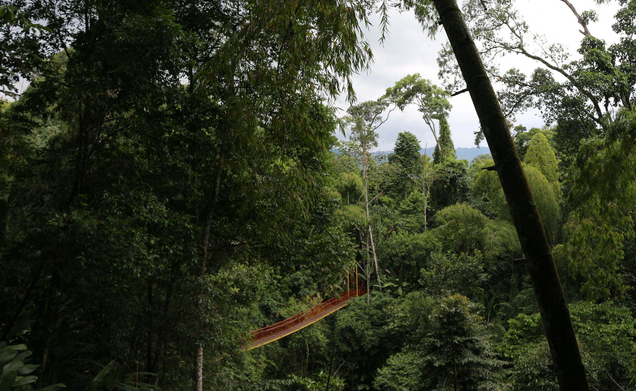 Incroyable nature en Colombie