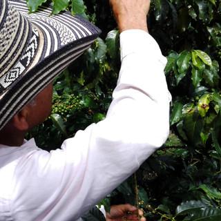 Producteur de café de Colombie
