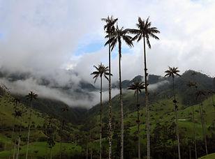Visite de la vallée Cocora et Salento