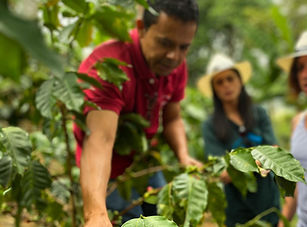 Visite Café à Fredonia, Colombie