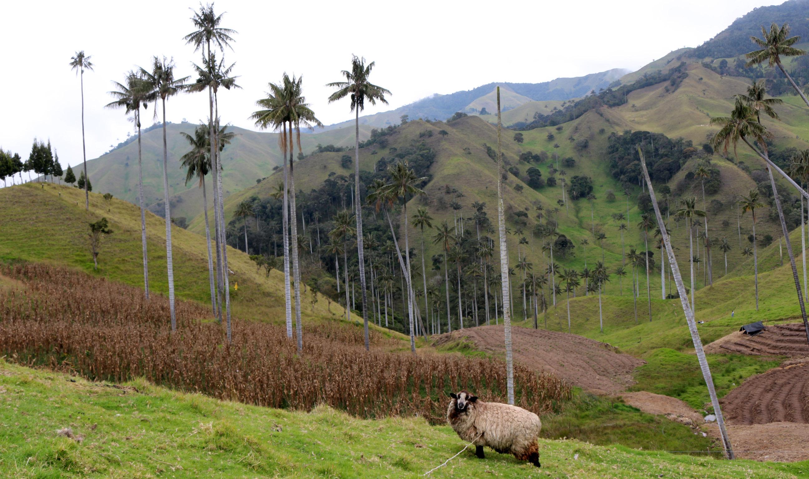 Les terres agricoles de San Felix