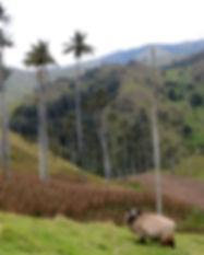 Visite d'Aguadas-Salamina-San Felix