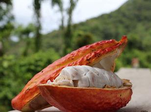 Découvrez le cacao à Santander