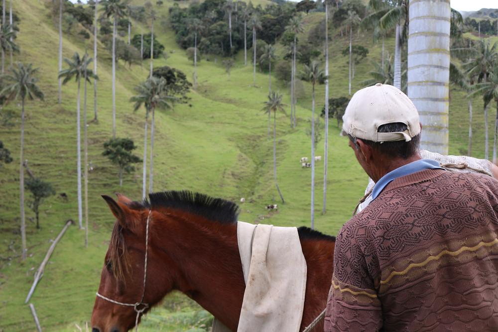 L'agriculture et conservation des palmiers de cire