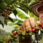 Gustavo, producteur de café de Colombie