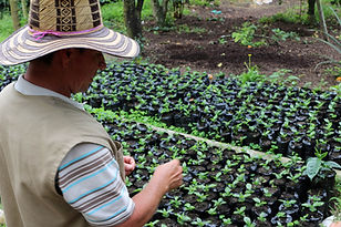 Calarca et Armenia en Colombie