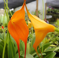 Tour orchidées et hortensias