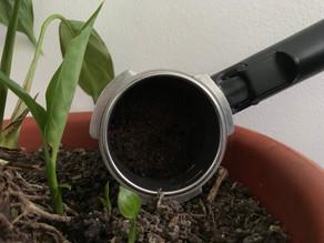 Que faire de son marc de café ?
