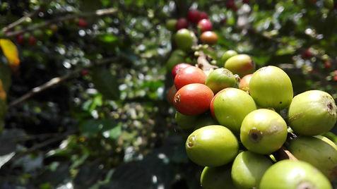 Blog sur les cafés de Colombie