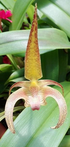 Orchidée en Colombie