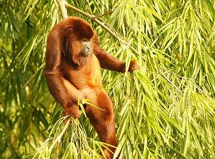 Visite du Parc national Otun Quimbaya