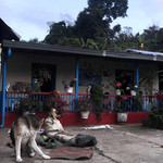Finca du café La Nogalera en Colombie