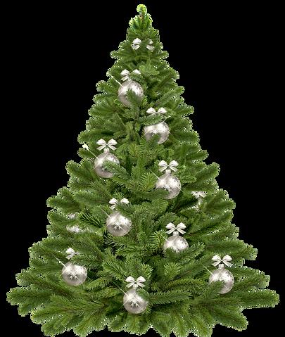 christmas-tree-1853582_1920.png