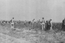 P.O.W. farm workers, 19.44