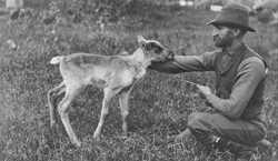 Walter Mansur with three week old caribou, June18-21,1893