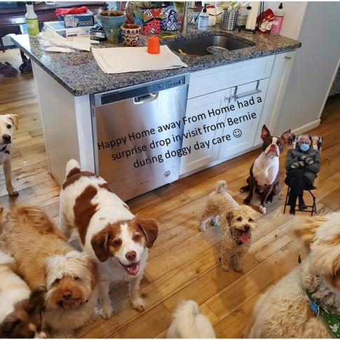 doggy day care with Bernie.jpg