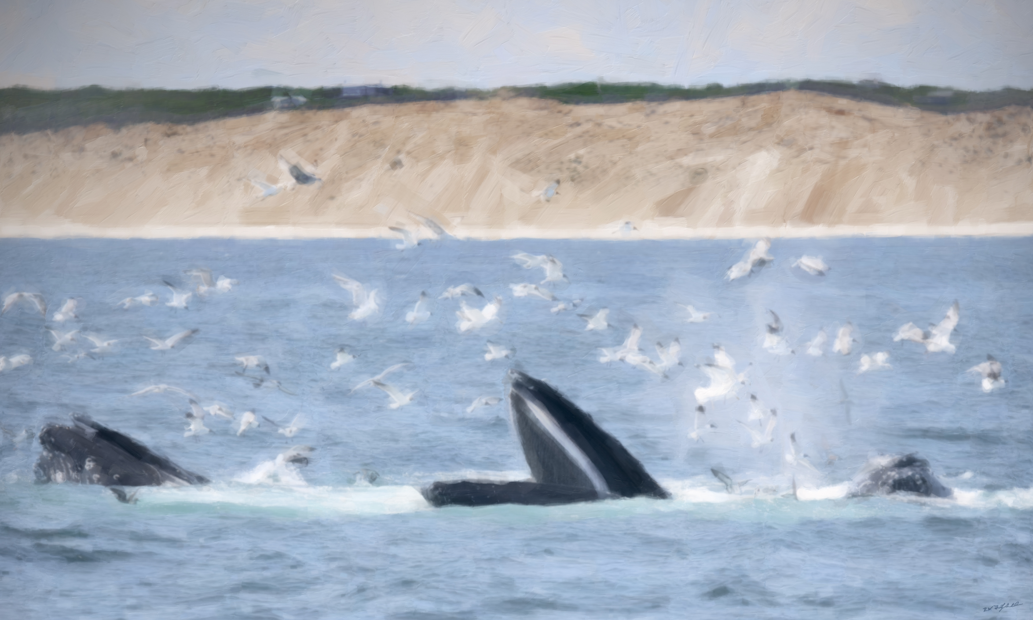 Hungry Humpbacks