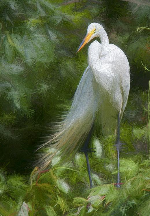 Great Egret IV