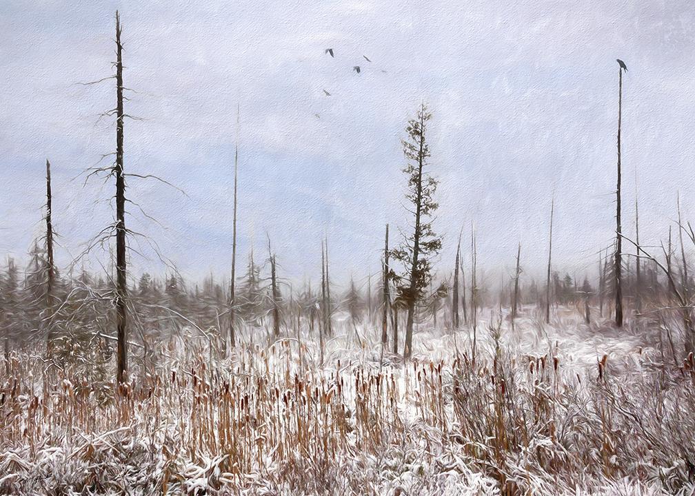 Frozen Cattails