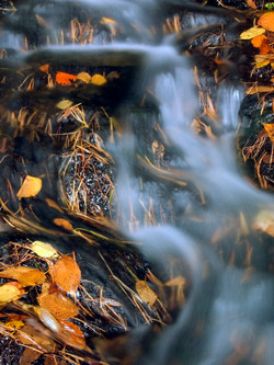 Needles, Leaves and Water