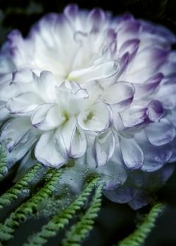 Floating Flowerpsd