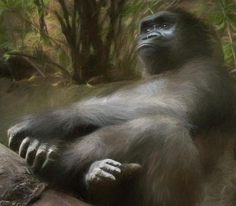 Kojo Resting