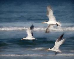 Tern Style