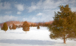 Winter Cedarscape