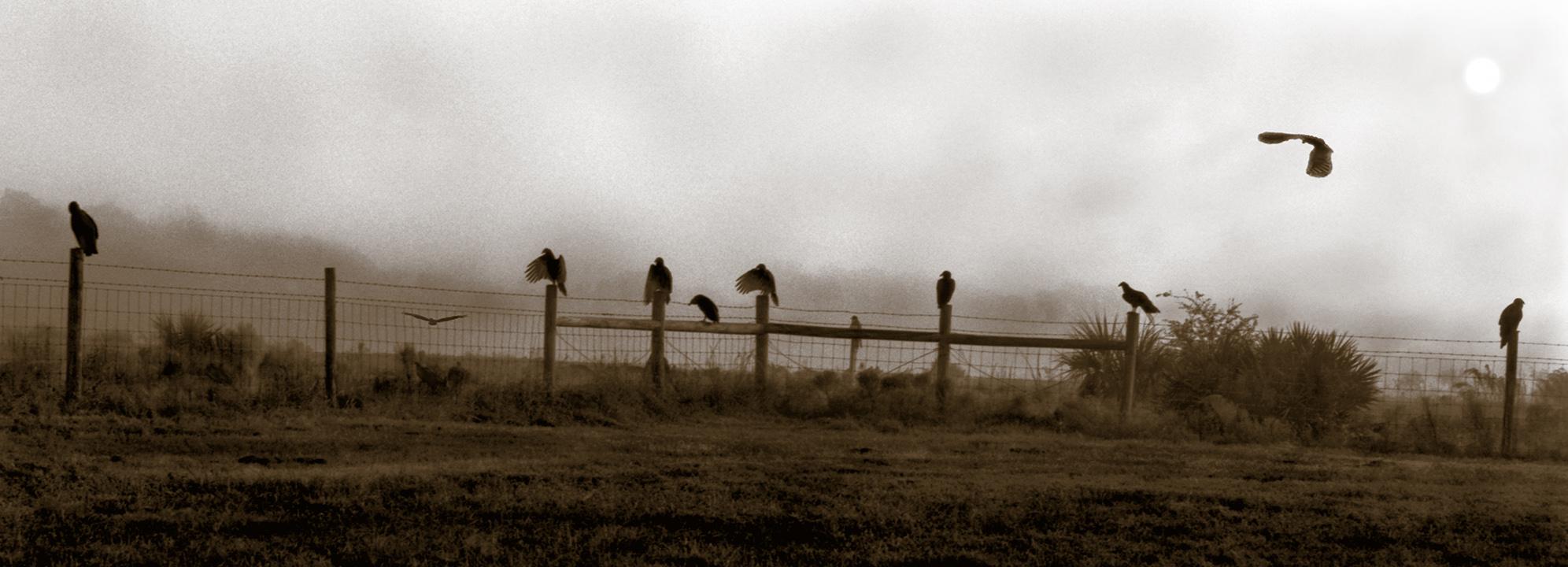 Daytona Vultures