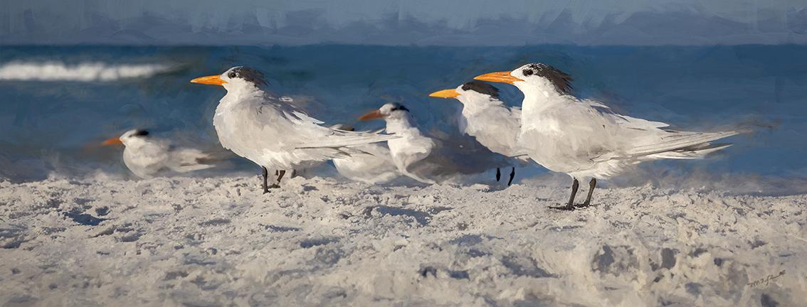 Waiting Their Tern