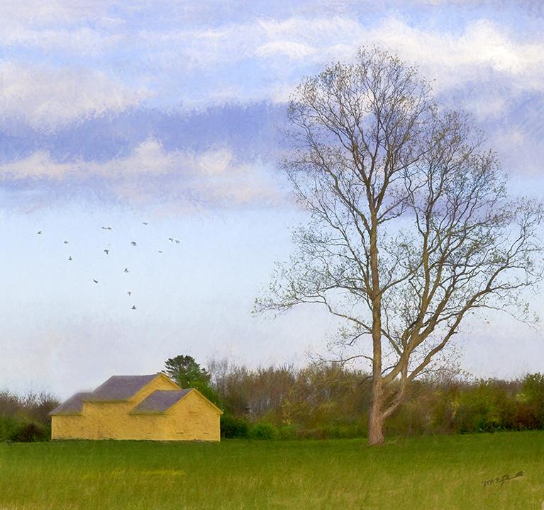 Yellow Barn Series Sentinel Tree