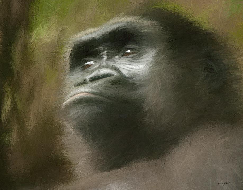 Kojo Portrait