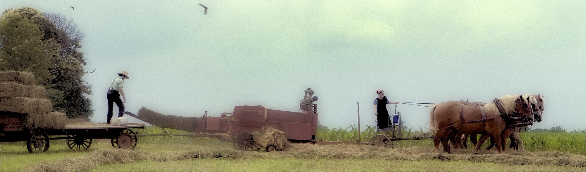 Hay Day II
