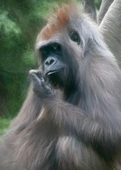 Kojo Contemplating
