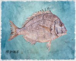 Gyotaku 1a