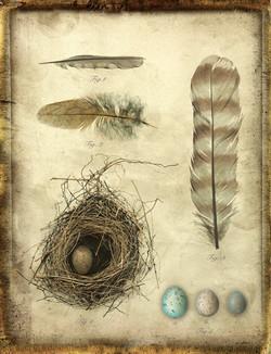 Avian Study