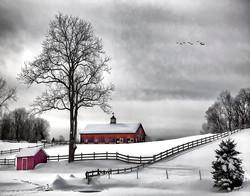 Swan Farm II