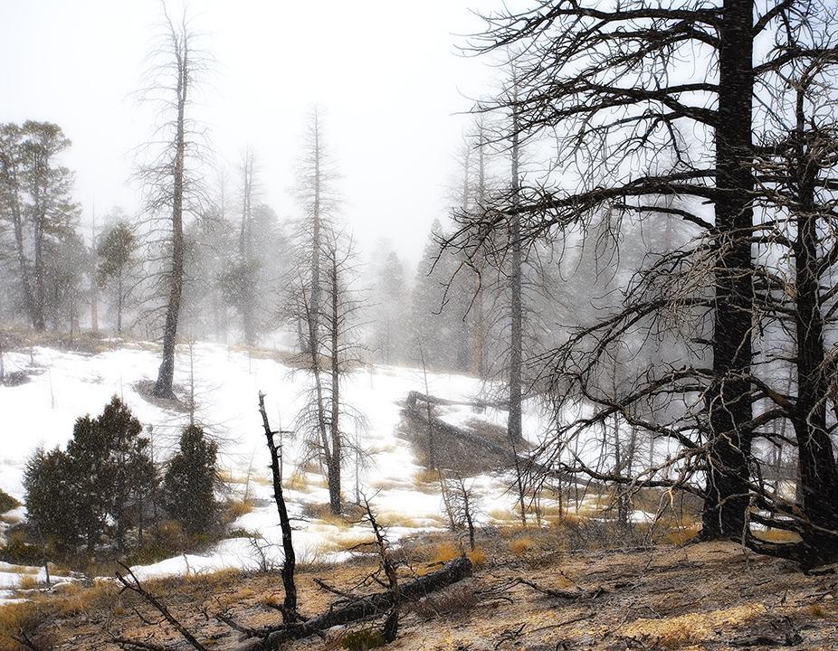 Woodland Snowstorm