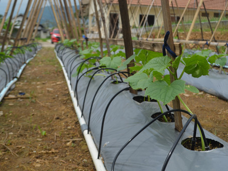 New Innovation of Drip Irrigation system using the Law of  Elevation