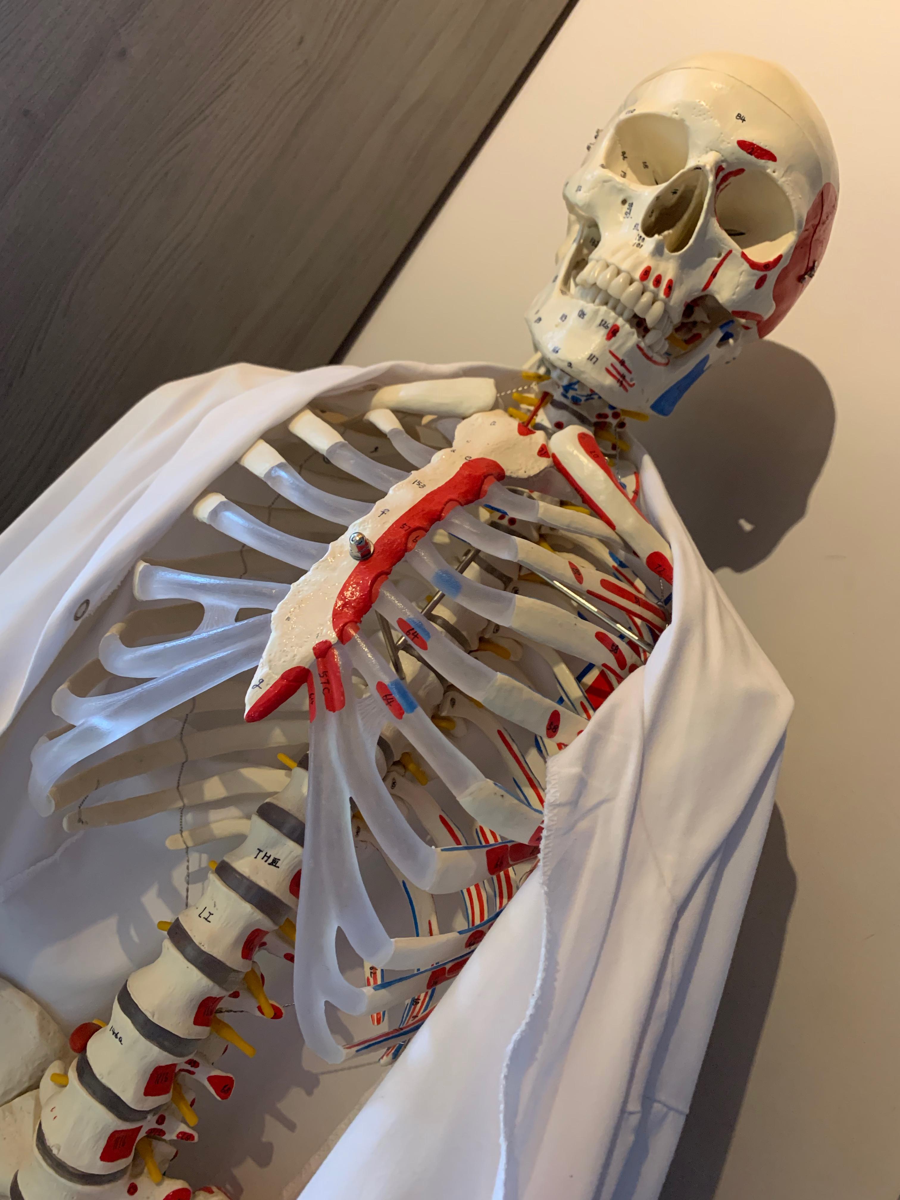 DB3-0202 - skelet