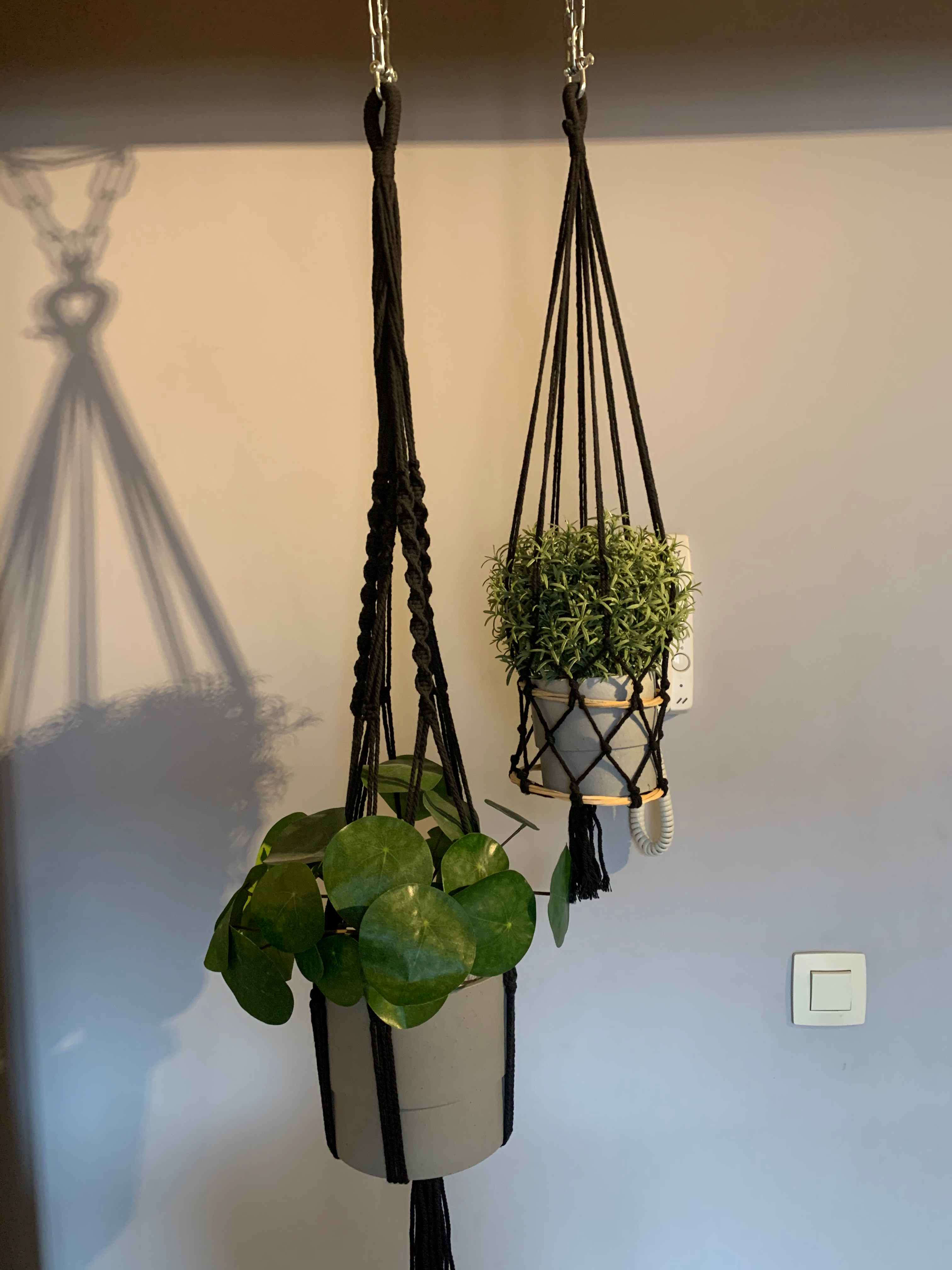 DB5-0203 - planten