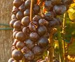 natuurwijn-aanbod-van-maele_edited.jpg